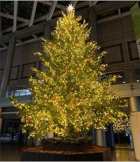 新宿パークタワー クリスマスツリー展示